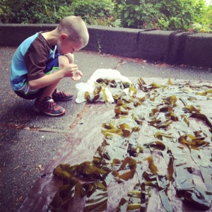 kiddo helping lay out seaweed