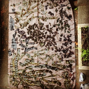 Seaweed drying on a tarp